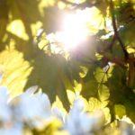 Güneşten Korunmak için Neler Yapmalıyız?